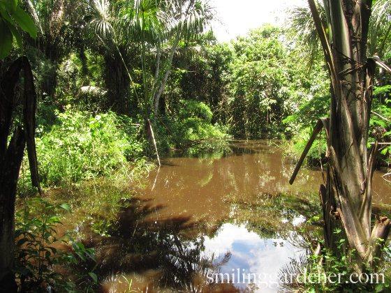 Amazon Mineralization