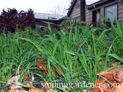 Preparing Garden For Winter By Cover Cropping
