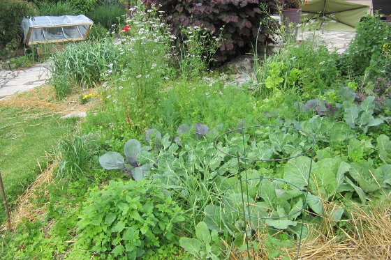 Phil's wild vegetable garden layout