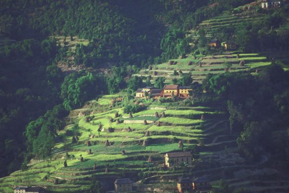 Vegetable Gardening In Nepal